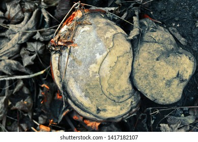 Fomes fomentarius (tinder fungus, false tinder fungus, hoof fungus, tinder conk, tinder polypore, ice man fungus) on dry leaves background, top view
