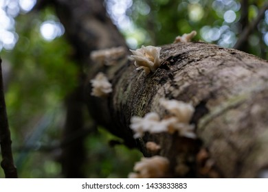 Fomes fomentarius (tinder fungus, false tinder fungus, hoof fungus, tinder conk, tinder polypore, ice man fungus) growing on willow trunk with rough bark background