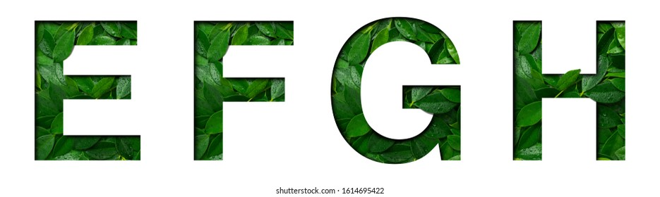 Font leafs E,F,G,H made of Real alive leafs with Precious paper cut shape. Leafs fonts collection set.