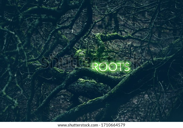 Font light green roots in the dark forest