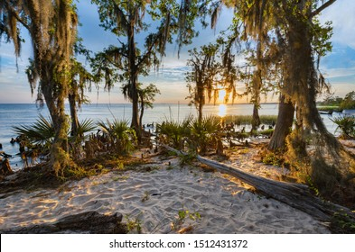 Fontainebleau State Park is a beautiful park in Louisiana. This may be one of my favorite images in my portfolio. The memories behind the pictures tell the biggest story.