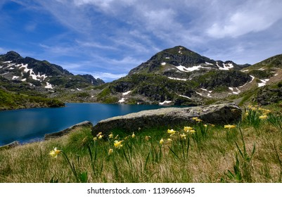 Fontargente mountain lakes in the french pyrenees with wildflowers, near Aston in Ariege