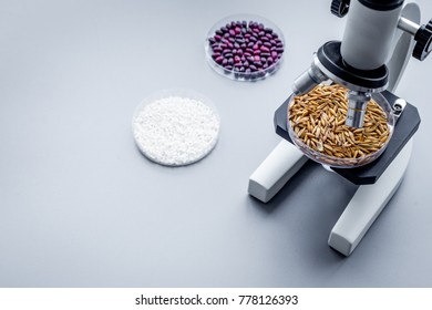 Food analysis. Wheat under the microscope on grey background copyspae