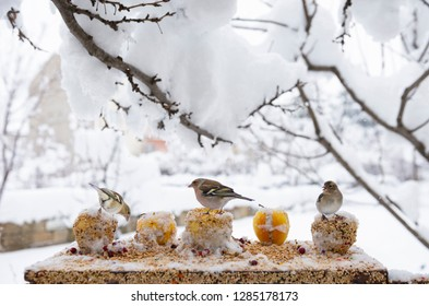 food for animals in nature