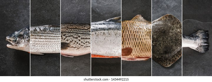 Food collage of various fresh fish, white fish pangasius, salmon red fish, trout, dorado, carp, flounder on dark stone background. Creative layout made of seafood, top view