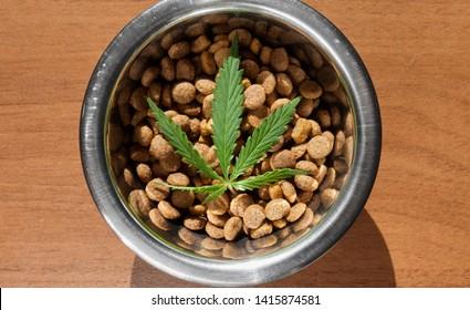 Lebensmitteldelikate für Hunde und Katzen in Gerichten mit grünem Hanfblatt, Nahaufnahme - CBD und Marihuana für Haustiere