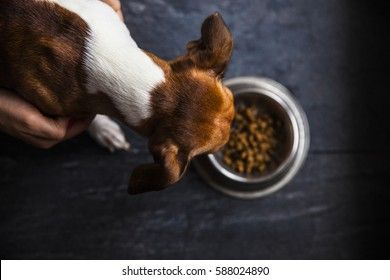 food for dogs in the plate