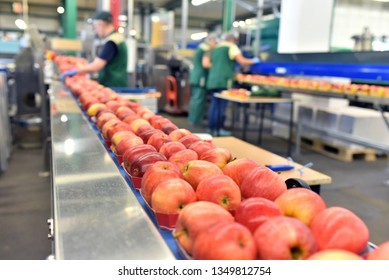 food factory: assembly line with apples and workers