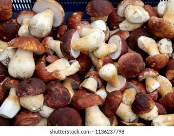 Food  ingredient -  mushrooms cep in a summer season