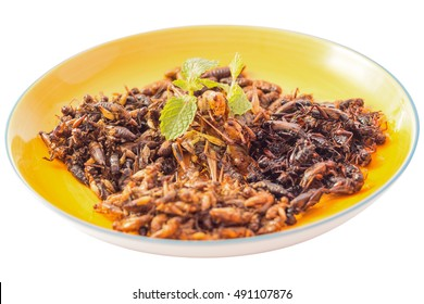 Food insect - Fried insects or Wood worm insect, Bamboo worm insect, Grasshopper insect, Cricket insect crispy after fried and add a light coating of sauce and garnish Thai pepper powder, Select focus
