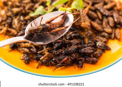 Food insect on spoon - Fried insects or Wood worm insect, Bamboo worm insect, Grasshopper insect, Cricket insect crispy after fried and add a light coating of sauce, Select focus.