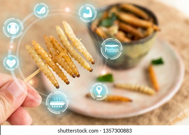 Food Insect: Woman hand holding Bamboo worm insect for eating as food snack deep-fried in plate on sackcloth and icon nutrition media. Bamboo Caterpillar is good source of protein edible. Entomophagy.