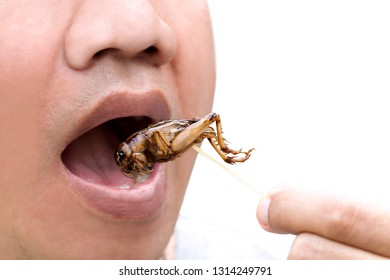 Food Insects: Man eating Cricket insect on wooden skewer. Crickets deep-fried crispy for eat as food snack, it is good source of protein edible and delicious for future food. Entomophagy concept.