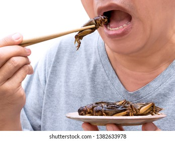 Food Insects: Man eating Cricket insect on chopsticks. Crickets deep-fried crispy for eat as food snack, it is good source of protein edible and delicious for future food. Entomophagy concept.