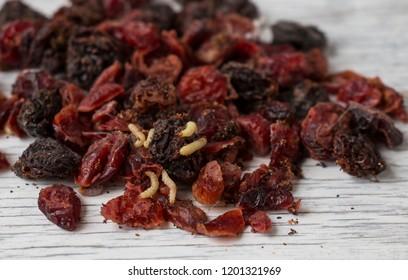 food moth larvae in spoiled dried fruit raisins