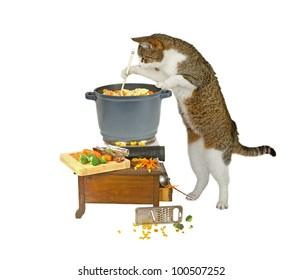 homemade cat food ideas