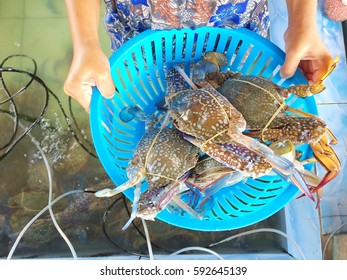 Food from ocean,Blue crabs on basket