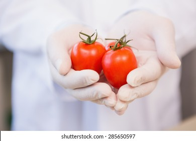 Food scientist showing tomatoes in laboratory