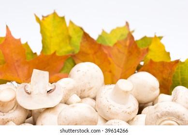 food serias: some mushrooms