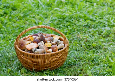 fool basket with mushrooms in grass