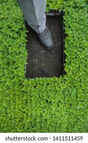 Foot in black box with green sprout.Sprout seeds of marigolds are grown in black pots. - Image