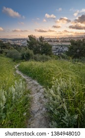 A foot path in a lush green filed leading towards the old city of Jerusalem, Israel.