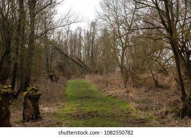 Foot path in willow forest,  Biesbosch National Park, Netherlands