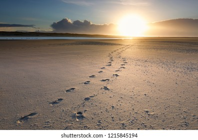 foot prints on sand beach to sun at sunset, North sea