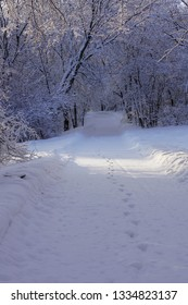 Foot tracks on a walking trail in the snowy woods