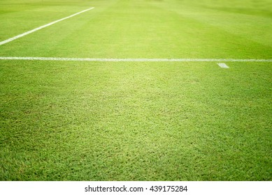 football field,Football field for competition