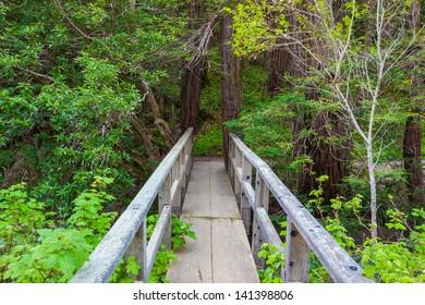 Footbridge in forest, Big Sur, California