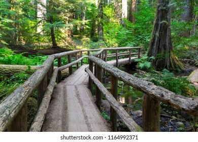 A footbridge in the forest in the Cascade Mountains