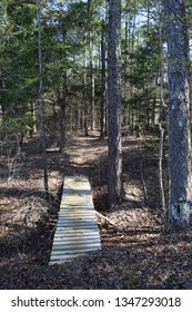 Footbridge on the Nester Trail in Trace State Park, Mississippi