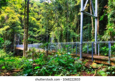 Footbridge over Crystal shower falls creek in Dorrigo national park. Remote wet temperate rainforest with lush evergreen canopy on a rainy day.