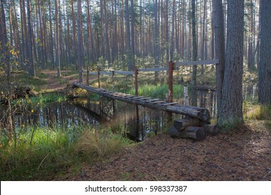 Footbridge over the forest river. Autumn landscape