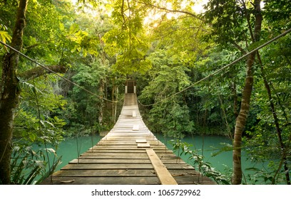 Footbridge over river in tranquil forest in Belize