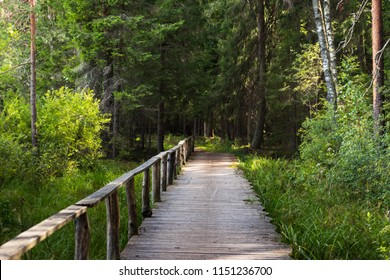 Footbridge Path Leading Deeper into the Forest, Moody Photo, on a Sunny Summer Day