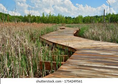 Footbridge through wetland,  Curvy Wooden Board walk across marshland after rain during sunny spring day