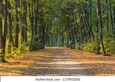 The footpath among trees in park in sunny weather in early fall autumn season