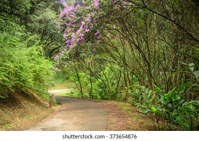 footpath between trees in  green dark forest of a park in Sao Paulo, Brazil
