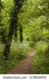 Footpath between trees in summer