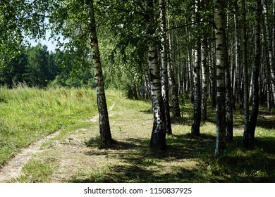 Footpath and birch trees in Uzkoe park in Moscow, Russia