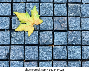 Footpath brick square block with yellow maple leaf, the beautiful pathway the natural environmental in autumn season. Bright maple leaf falling on a pavement stone floor in outdoor park or garden.