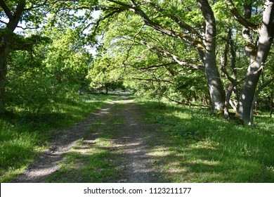 Footpath in a bright and lush deciduous forest at the swedish island Oland