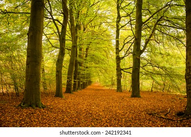 Footpath covered with red autumn leaves with trees on both sides