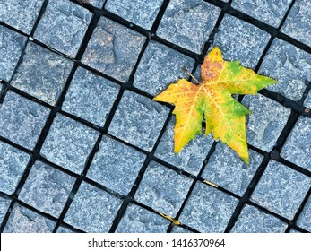 Footpath Diamond brick block with a yellow maple, the beautiful pathway of natural environmental in autumn season. Big yellow maple leaf falling on a pavement stone floor in outdoor park or garden.