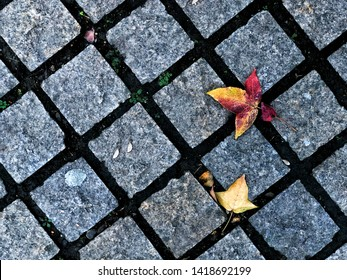 Footpath diamond brick block with yellow maple, the beautiful pathway through the natural in the public park in the morning. Maple leaf falling on a pavement stone floor in outdor park or garden.
