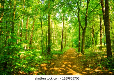 Footpath in a forest