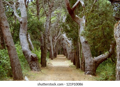 A footpath in the forest of Veli Rat on Dugi Otok in Croatia