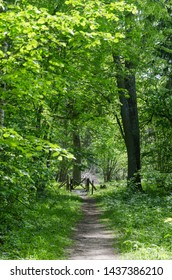 Footpath in a fresh greenery by summertime in the swedish nature reserve Halltorps Hage on the island Oland